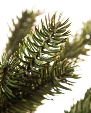 Nottingham Pine 260 cm Műfenyő