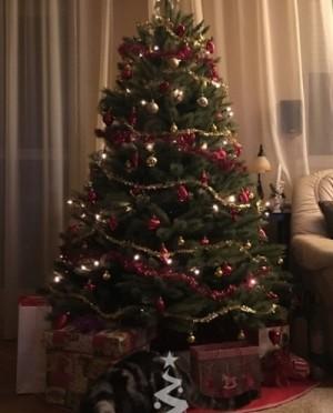 Karácsonyfa-Műfenyő-Forest Frosted Pine 185 cm