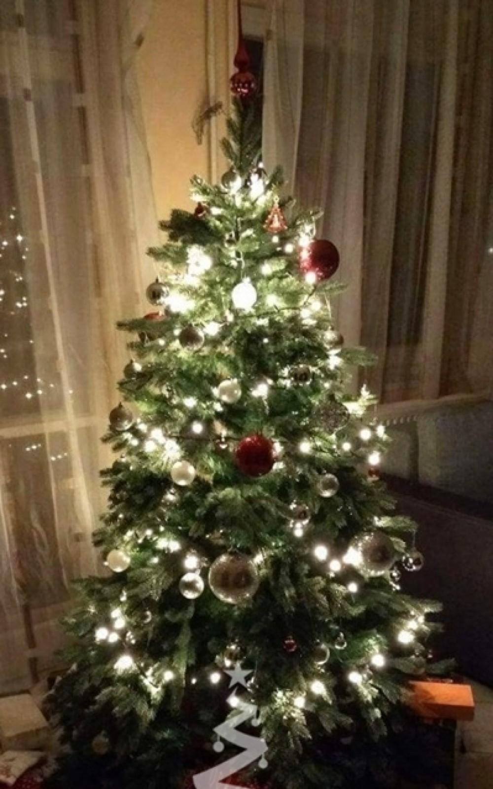 Karácsonyfa-Rocky Mountain Spruce 185 cm