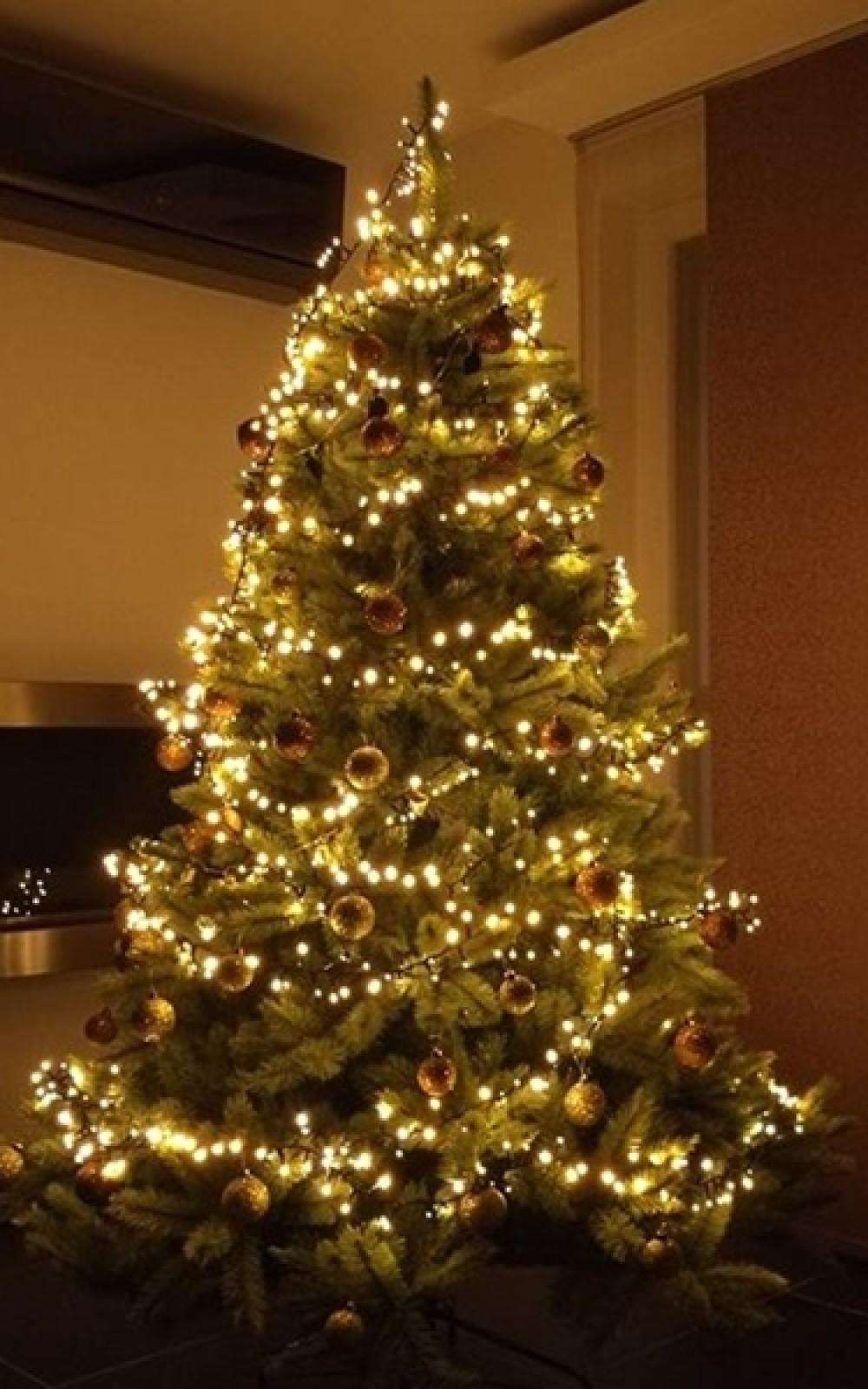 Karácsonyfa-Forest Frosted Pine 230 cm
